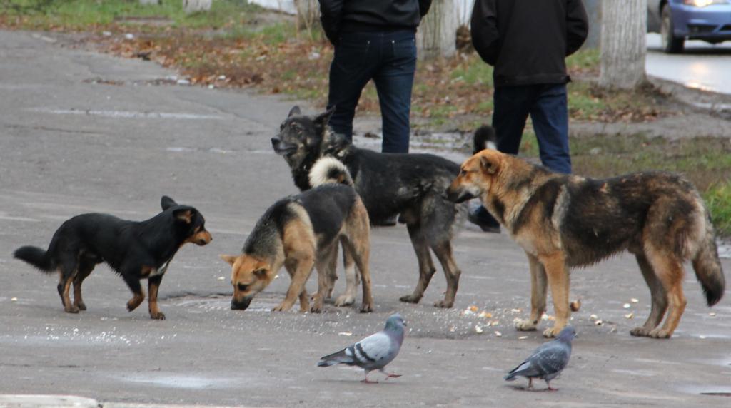 Руководство составит приблизительно список рискованных пород собак— мнения рязанцев