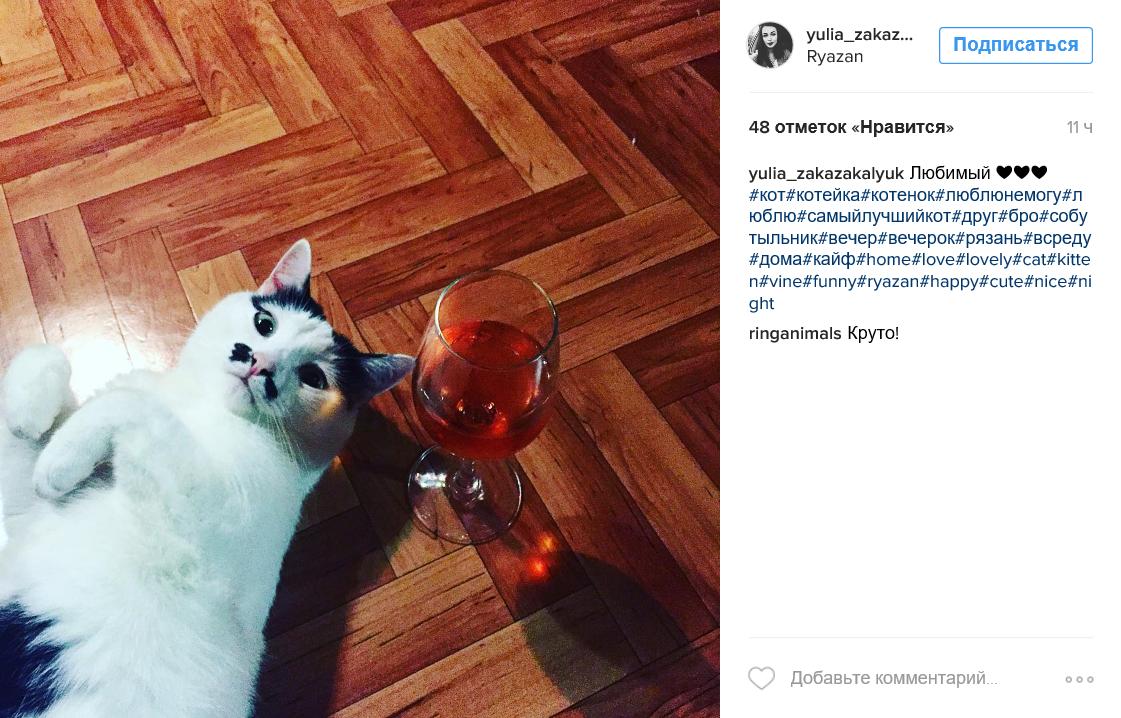 Идеи для фотосессии кошек