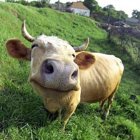 Рязанская область «взяла бронзу» в рейтинге самого слабого роста цен на говядину