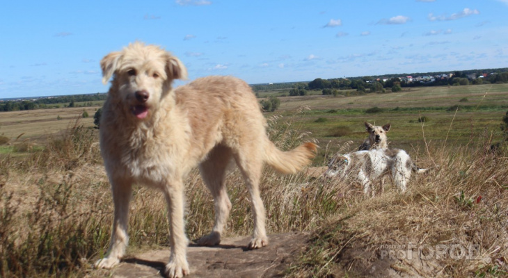 Продолжение скандальной истории - война между жителями Канищева не угасает из-за бездомных собак