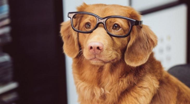 Как подобрать очки для своего типа лица: простые правила, которые должен знать каждый