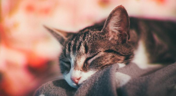 Как устроить своему коту шикарный отдых, если не получилось взять его с собой