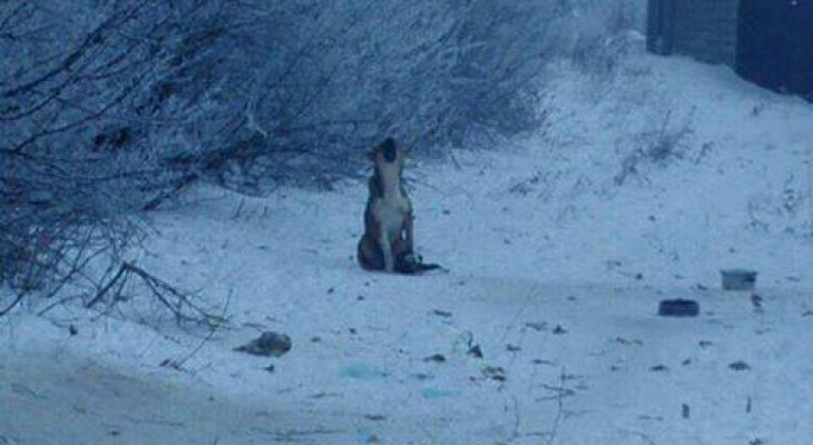 В Кораблино собака две недели бегает с капканом на лапе