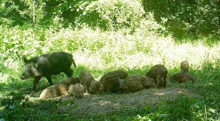Охотиться - строго по лицензии: специалисты провели анализ охотничьих ресурсов на территории региона