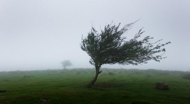 Не забудьте зонтик: МЧС предупреждает о грозах и сильном ветре