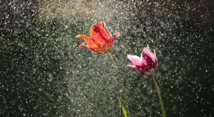 О погоде в Рязани - в выходные будет прохладно и дождливо