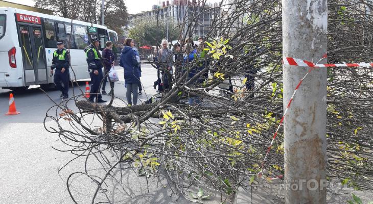 """""""Мужчина находится в тяжелом состоянии"""" - в минздраве рассказали о самочувствии рабочего на которого упало дерево"""