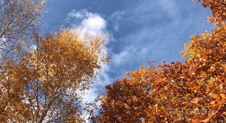 В четверг в Рязани потеплеет до +11 градусов