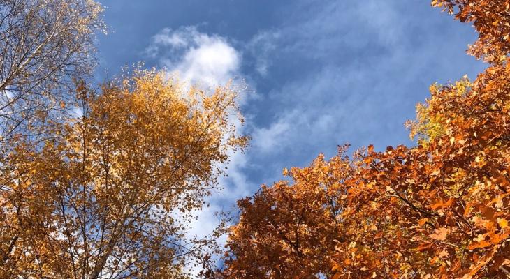 В воскресенье в Рязани будет тепло, но дождливо