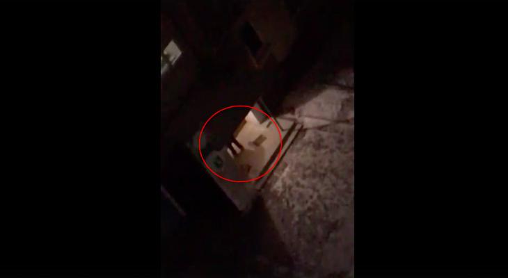 Примат разбушевался: на Новоселов ночной дебошир разбудил целый квартал