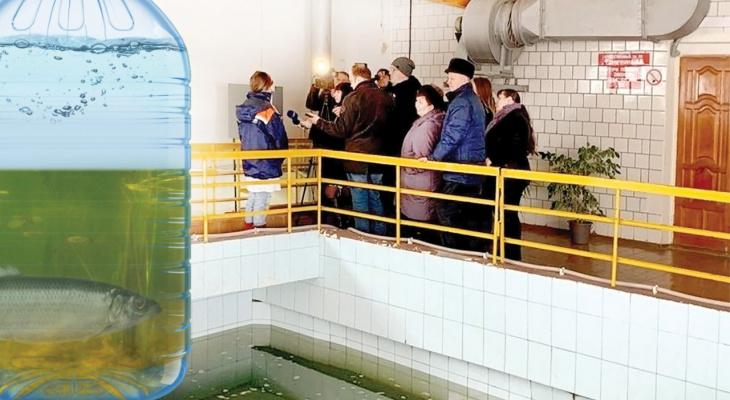 """Речная, неразбавленная: в январе """"Водоканал"""" внезапно  снизил забор артезианской воды"""