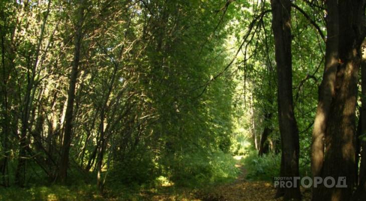 Построить любой ценой: над рязанским Лесопарком все больше нависает угроза вырубки