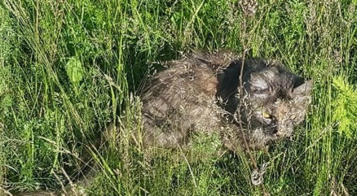 Живодеры? В Касимове обнаружили кошку в полиэтиленовом мешке