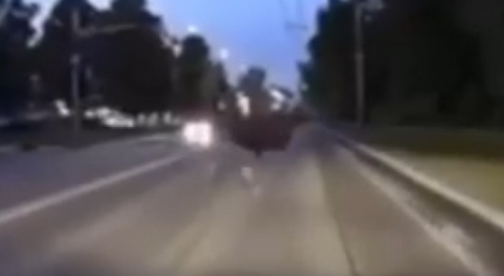 Еще один: в Рязани засняли лося на Куйбышевском шоссе