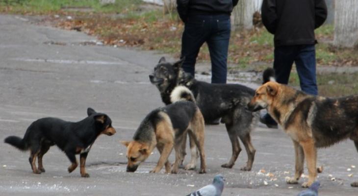 Страшно выходить: на Белякова обосновалась свора бродячих собак
