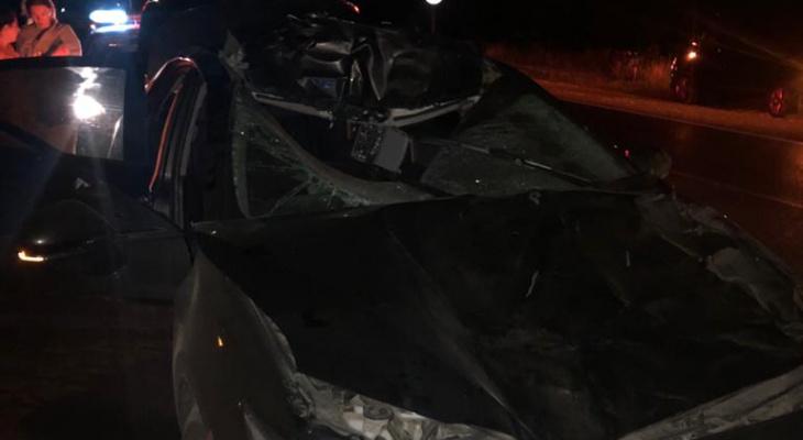 В Рязанском районе сбили лося: в аварии погиб пассажир автомобиля