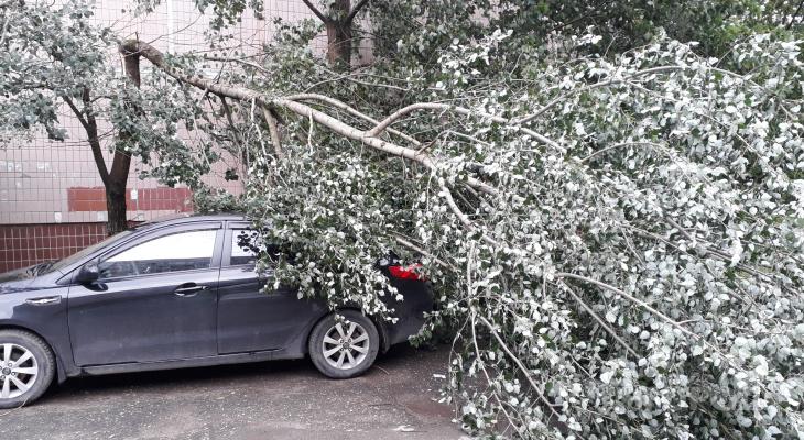 Если ветер свалил дерево: куда обращаться за помощью и уборкой