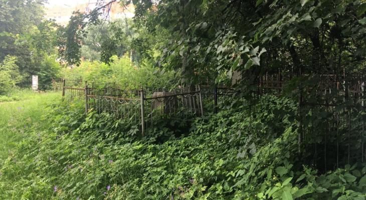 Лазаревское кладбище: жители просят провести территорию в порядок