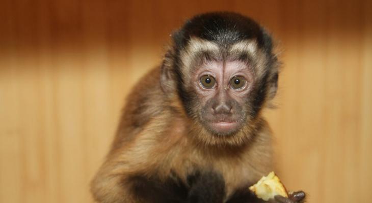 Человеческая глупость: как люди убивают животных в зоопарках едой