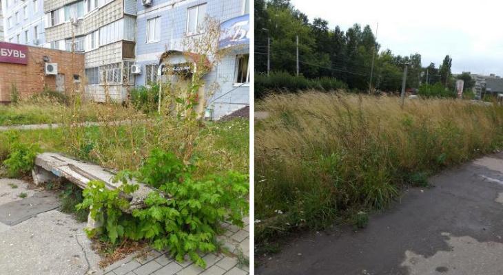 В этой траве можно Гордуму спрятать: рязанцы показали, как заросла улица Новоселов