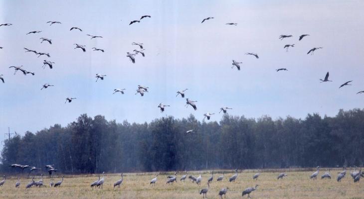 Виноваты химикаты: вШиловском районе редкие птицы находятся под угрозой исчезновения