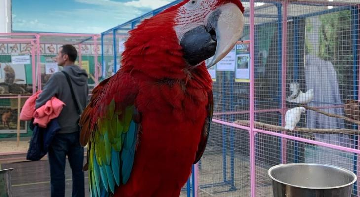 Штраф - 3000: в Рязани на выставке животных обнаружили нарушения