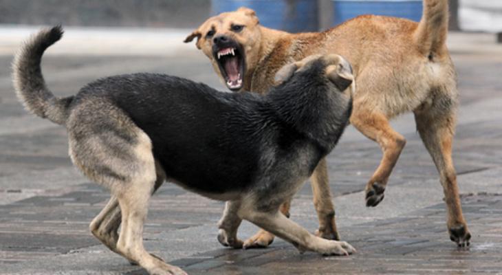 Распространенная проблема: казанские спецслужбы не ловят бродячих животных
