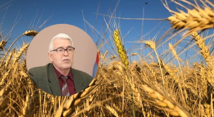 Много снега - много хлеба: по мнению эксперта, суровая зима может предвещать урожайный год