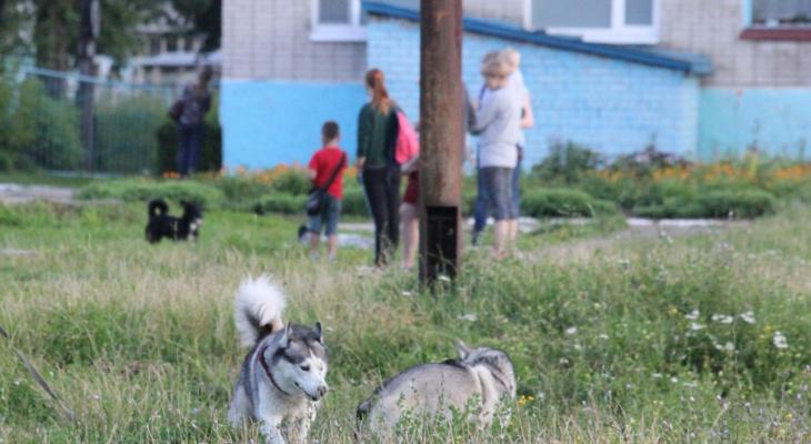Дешево и эффективно: рязанец попросил мэрию установить в парках урны для собачьих экскрементов