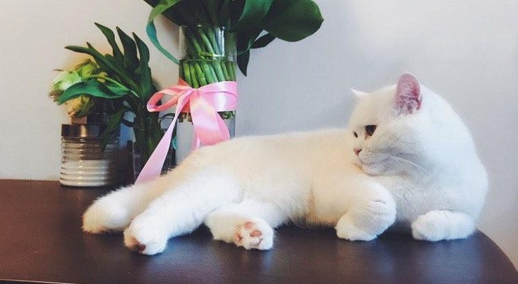 Плюшевые лапки: последний шанс проголосовать за лучшего кота