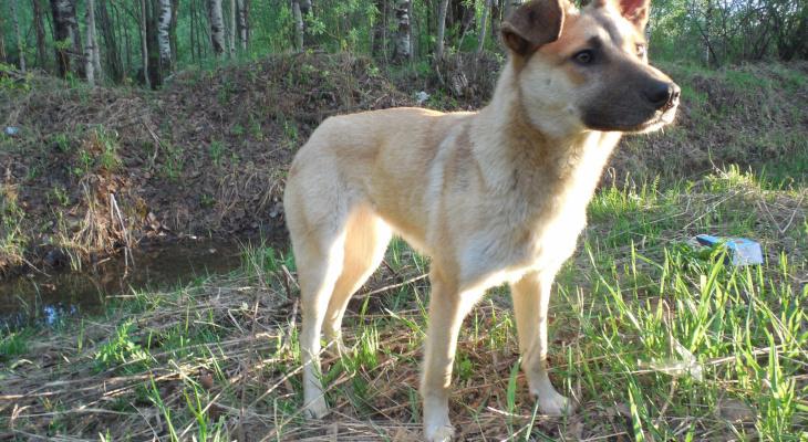 Для дворняжек: в Рязани пройдет выставка беспородных собак