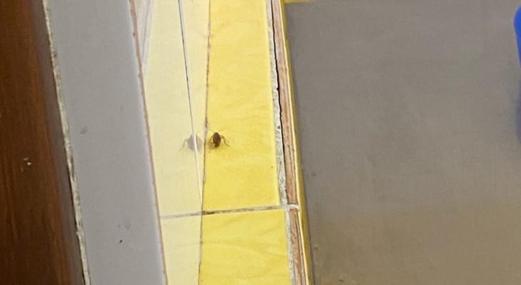 Мэрия: в субботу в рязанской школе №73 будут травить тараканов