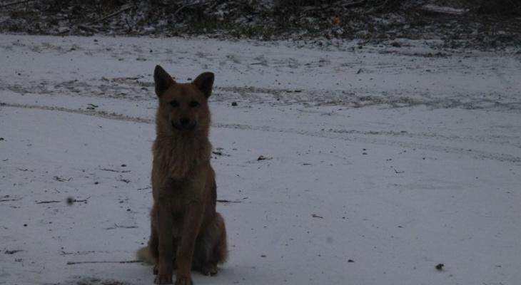 Растерзали собаки: в Новомичуринске нашли обезображенное тело мужчины