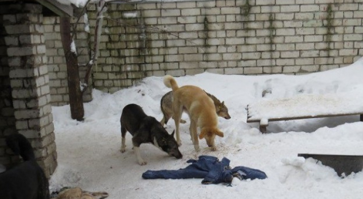 Аукцион не состоялся: в Рязани не нашли организацию по работе с бродячими животными