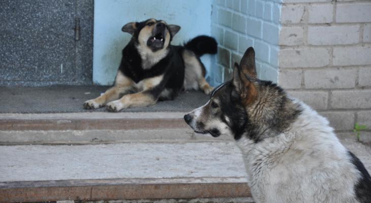 Взялся за нож: касимовец грозился убить соседку из-за собачьего лая
