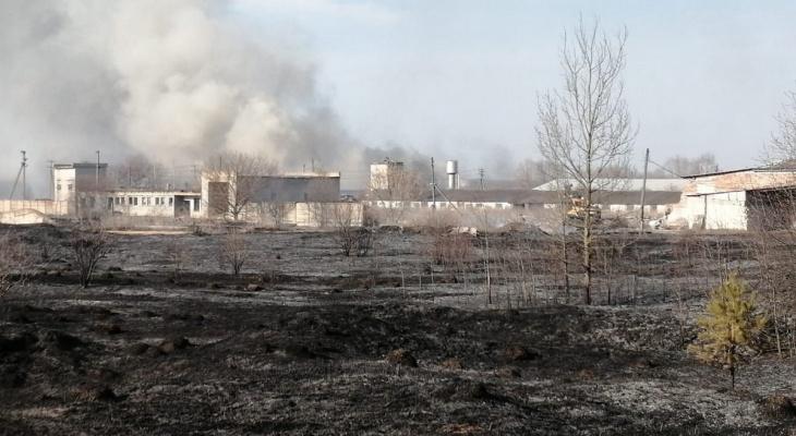 И до коров добралось: в Сасовском районе из-за поджога травы загорелась ферма