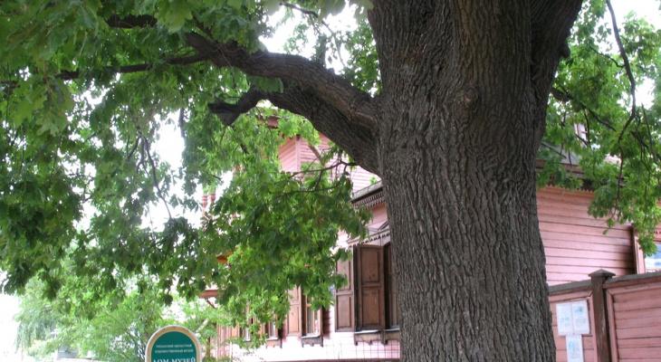 Необычный конкурс: рязанский дуб может стать Главным Деревом страны