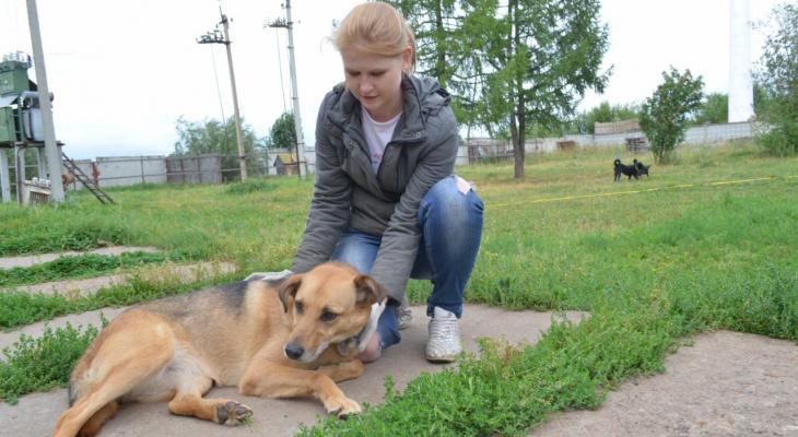 За 181 тысяч рублей: в ЦПКиО отремонтируют площадку для выгула собак