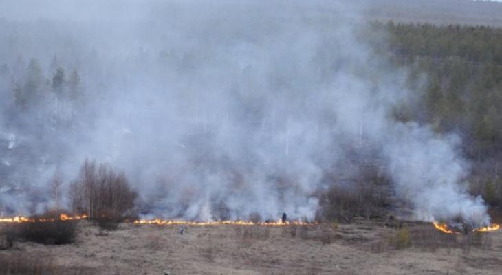 Шашлыки отменяются: Любимов запретил посещение лесов