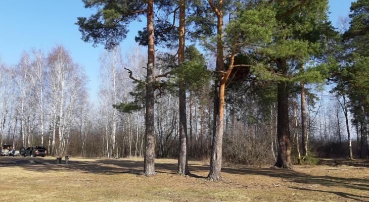 Важное постановление: в лесах Рязанской области введён противопожарный режим