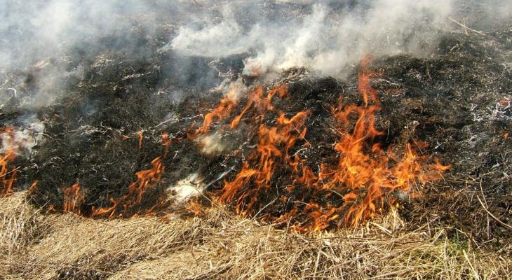 Сухая трава: в Сараевском районе местный житель предотвратил пожар