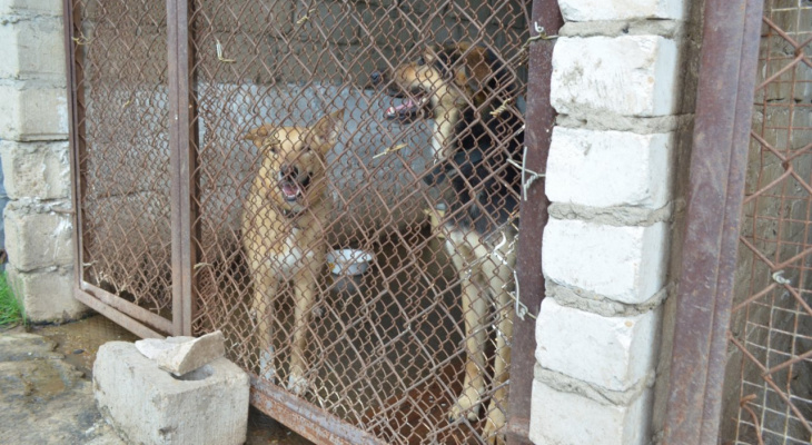 Нет финансирования! Рязанский приют просит помочь накормить собак