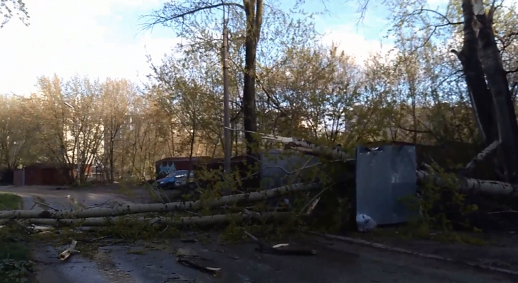 Из-за ветра: в Горроще дерево упало на пешеходный переход