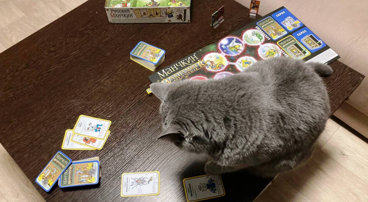 «Манчкин Вархаммер»: игра, которую оценила даже кошка
