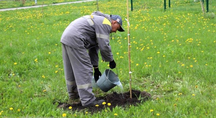 Ещё сто саженцев: в Рязани продолжается высадка деревьев