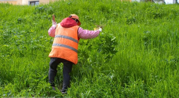 Борьба с опасным растением: в Рязани уничтожают борщевик