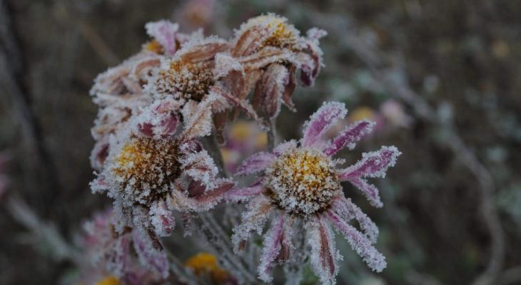 Холодное лето: в ночь на среду ожидаются заморозки