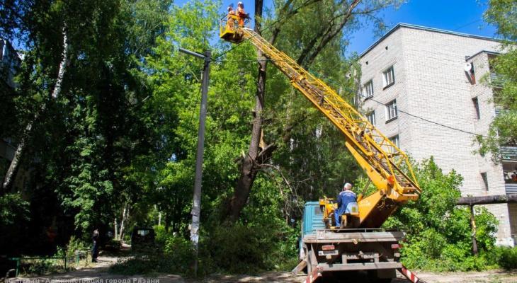 В Рязани продолжается валка аварийных деревьев