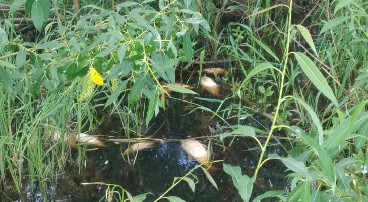 На Пре массово погибла рыба: рыбаки подозревают браконьеров