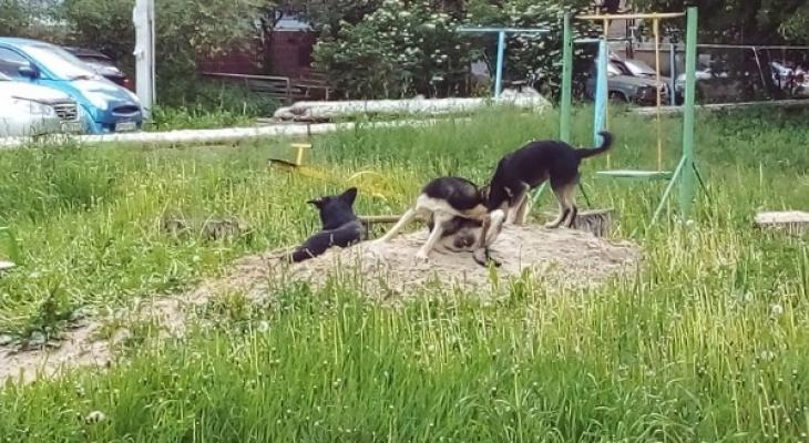 Четвёртая попытка: тендер на отлов бродячих собак разделили на две части